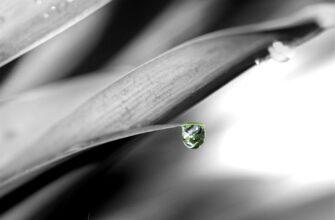 Капля рос на листке растения